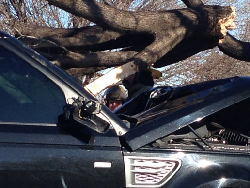Tree through my windshield
